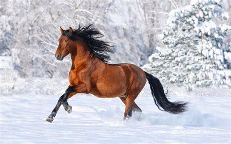 wallpaper for desktop of horses hd wallpapers desktop horses hd wallpapers