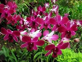 Plants In Tropical Rainforest - plants tropical rainforests