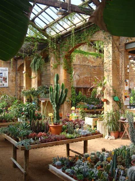 morning    paradise plants hivernacle