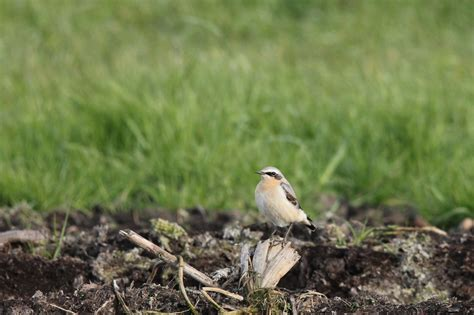 len vogel lüneburg inheemse vogels arjan boelen vogelfotografie