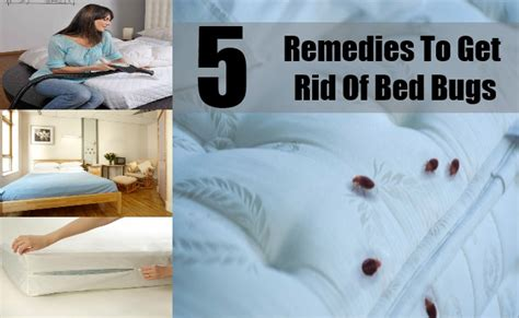 what to use to get rid of bed bugs 5 best remedies to get rid of bed bugs easy ways to get