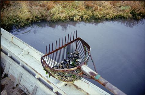 licenza di pesca nelle acque interne tipo b inquadramento