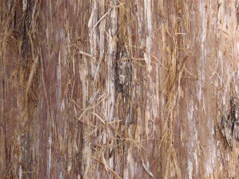 Fleas Hardwood Floors by Can Cedar Kill Fleas Flea Bites Cedar Also