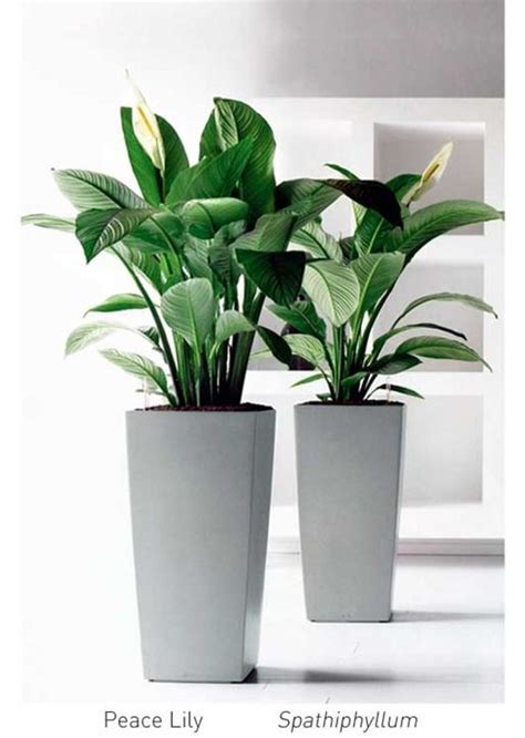 best plants for office best 25 office plants ideas on best plants
