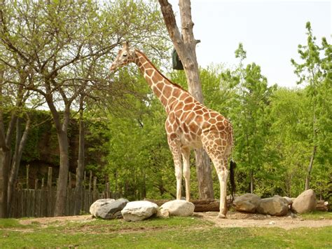lincoln park zoo events image gallery lincoln park zoo chicago