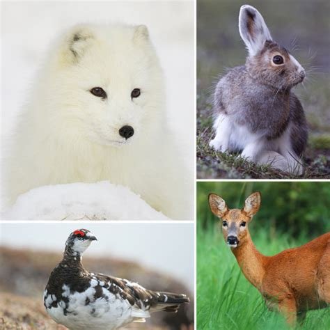 animals that change color animals that change colors with the seasons popsugar pets