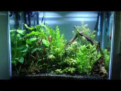 gallon planted aquarium jungle aquascape youtube