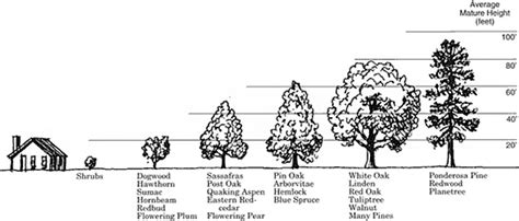 Finding A Tree Tree Care Tips Amp Techniques At Arborday Org Plum Trees And Soil Type