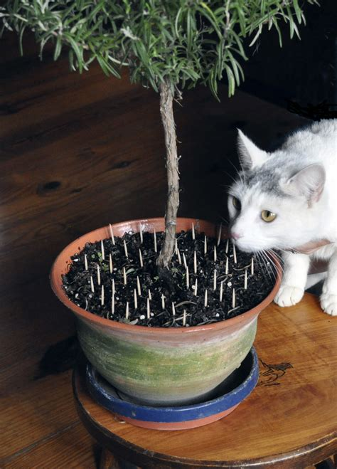 take care mixing cats houseplants the spokesman review