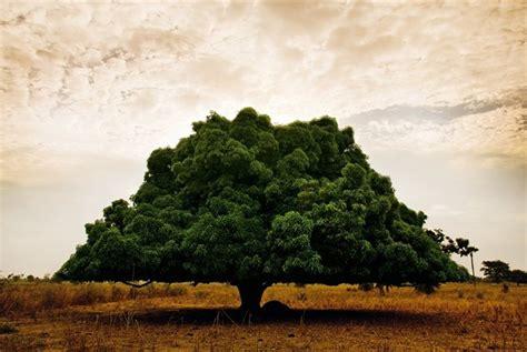 vanity l albero della vita di kurshuni viaggio in senegal