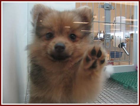 wisconsin puppy mill project inc petland pet store in