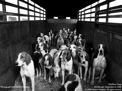 dog wallpaper dogs wallpaper 13632654 fanpop dog wallpaper dogs wallpaper 14050850 fanpop