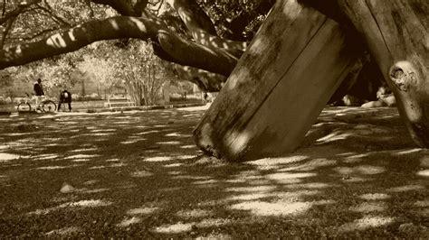 giardini pubblici cagliari i giardini pubblici di cagliari sardinia12