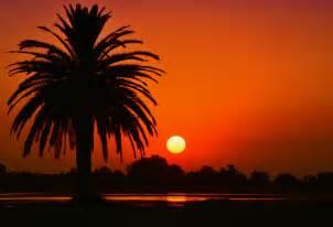 palm tree landscape free stock photo of laguna landscape palm tree
