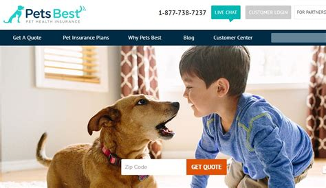 petsmart insurance how to find the best pet insurance plan for your clients propertycasualty360