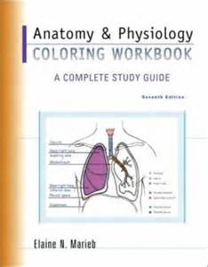 anatomy and physiology coloring workbook answers bone fractures anatomy physiology coloring workbook by elaine nicpon