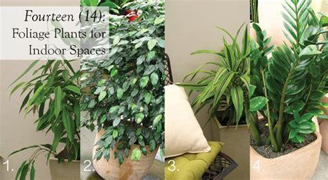 indoor foliage plants hardy houseplants care