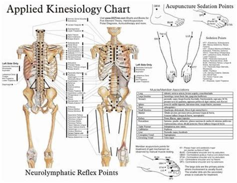 kinesiology diagram 17 best images about kinesiology on acupuncture points health and charts