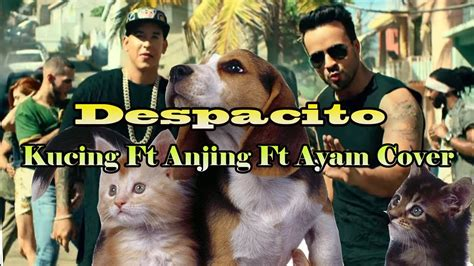 despacito kucing despacito kucing ft anjing ft ayam cover youtube
