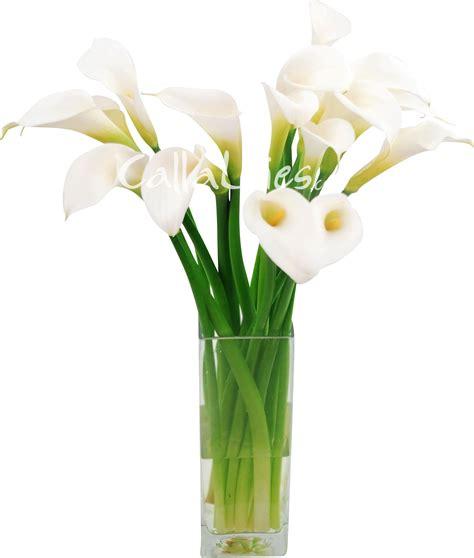 medium size white calla lilies mini calla lilies