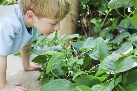 Magic Garden Tucson by Butterfly Magic A Tropical In Tucson Tucson