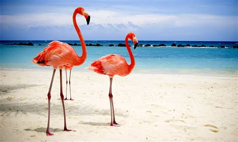 flamingo mobile wallpaper flamingo full hd quality wallpapers for desktop and mobile
