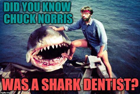 San Jose Sharks Meme - sharks imgflip