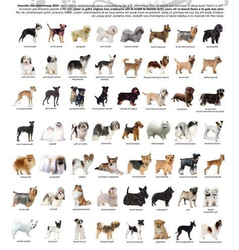 dog breeds   info hd breed list  small