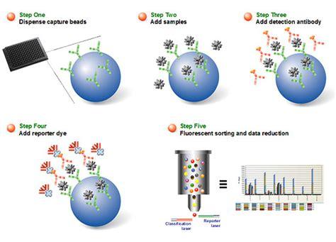 multiplex bead array bio plex multiplex immunoassays applications