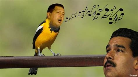 imagenes venezuela comicas chistes bromas y memes del pajarito chiquitico de nicol 225 s