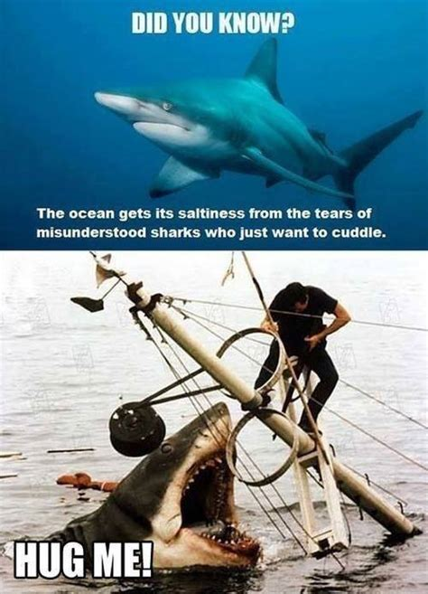 Funny Shark Meme - sailing humor soak into a selection of hilarious