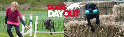 dogs day out dogs day out 2018 detection dogs