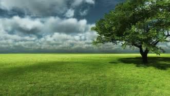 big tree with grass field landscape wallpaper wallpaper