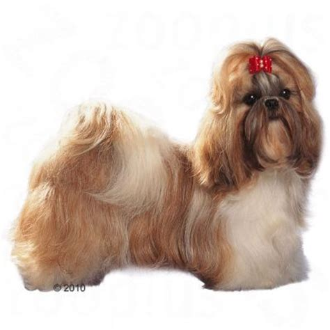 shih tzu feeding guide royal canin shih tzu free p p on orders 163 29 at zooplus