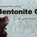 Bentonite Clay Detox For Dogs by Bentonite Clay Detox Dogs Naturally Magazine