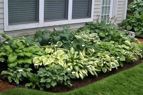 hosta combo garden for front porch gardening such