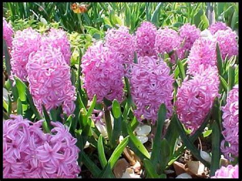 all best picos poze desktop flori buchete de flori desktop peisaje de primavara pentru imagini pictures