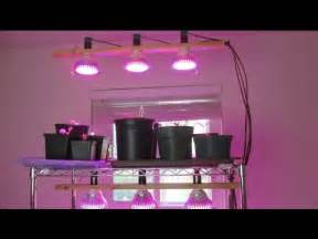 starting seeds indoor led grow light stand progress