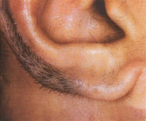 the manliest way to remove your ear hair gq ear hair www pixshark com images galleries with a bite