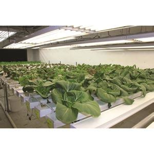 Hydrohobby For All Your Hydroponics Gear by Hydrocycle Commercial 6 Quot Nft Systems Growers Supply