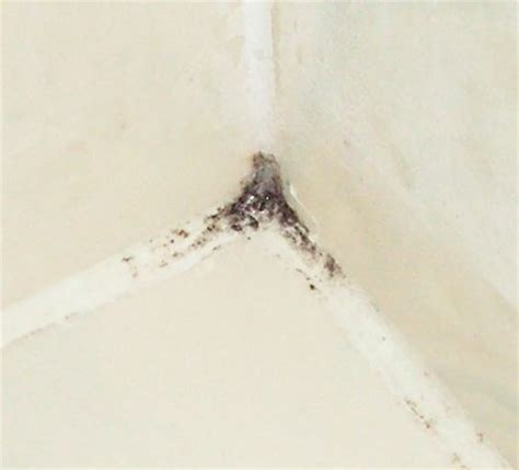 is bathroom mold toxic toxic black mold bathroom www pixshark com images galleries with a bite