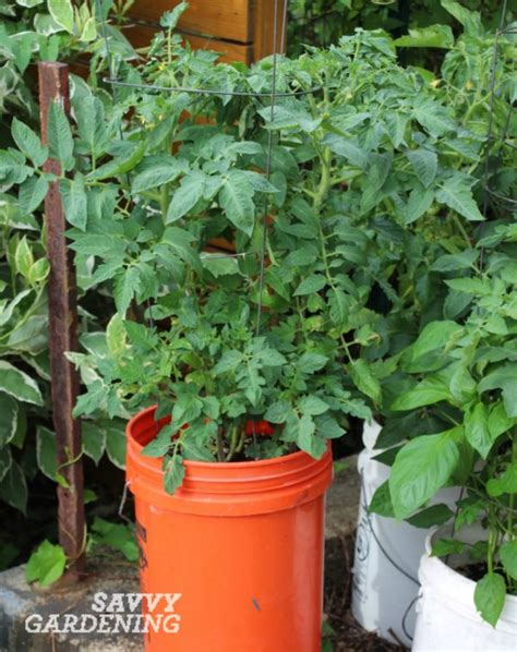 container gardening vegetables and herbs crops in pots success with vegetable container gardening