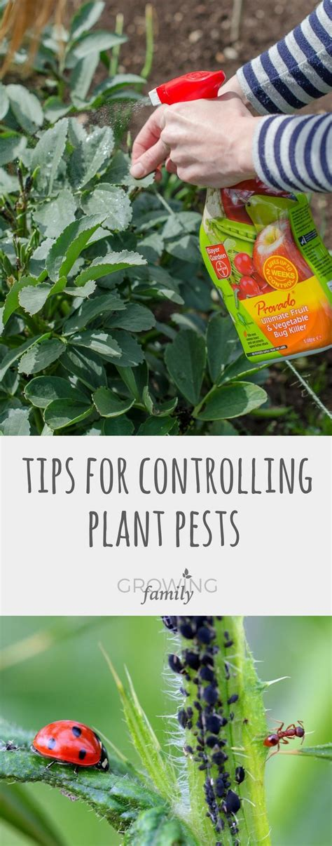 8 Ways To Deal With Pests by Best 25 Garden Pests Ideas On Identify Bugs