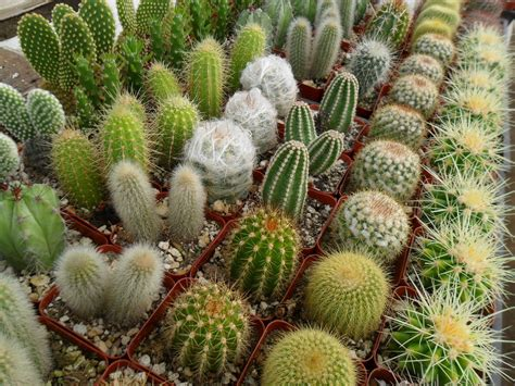 8 succulents and cactus plants great table favors make a