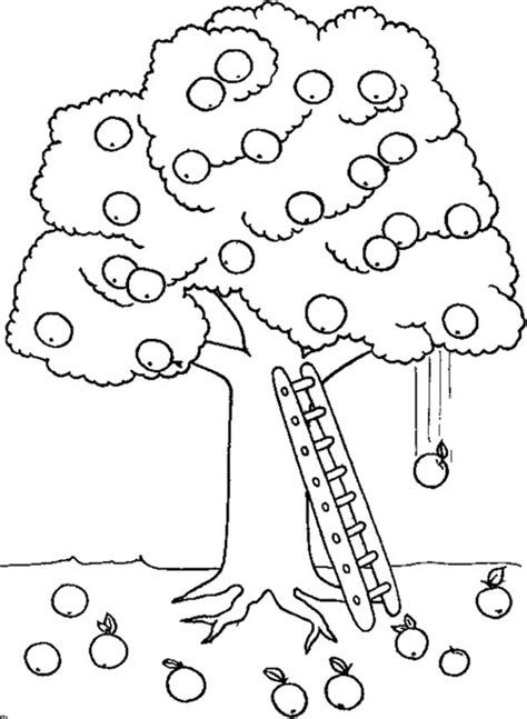 coloring page tree with fruit 48 best images about fruit and veggie coloring pages on