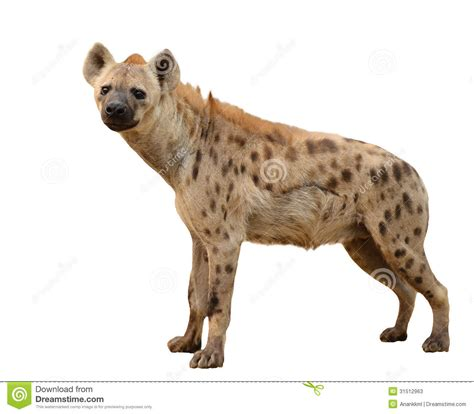 hyena pictures kids