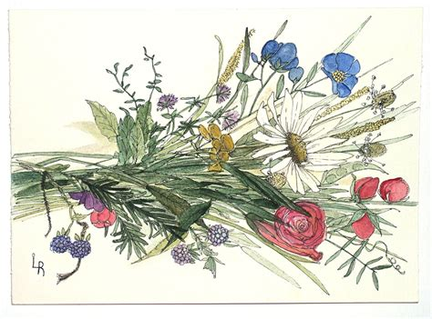 libro botanical painting in gouache botanical watercolor painting woodland garden wildflower