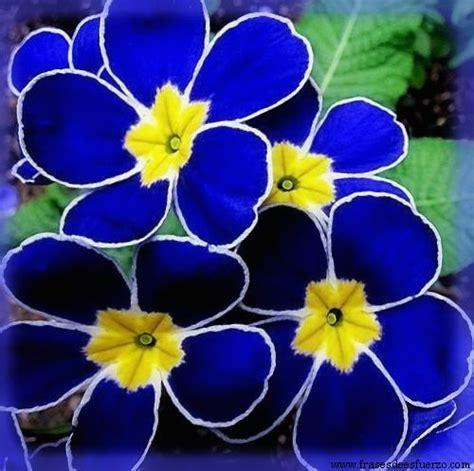 imagenes flores y nombres siete im 225 genes de flores ex 243 ticas gratis muy bellas