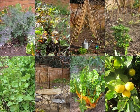 Winter Vegetable Garden Winter Vegetable Garden Quote
