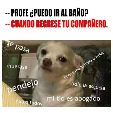 Memes De Chihuahua - memes perros chihuahua memes perros pinterest